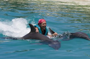 Dolphin close encounter Bahamas